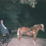 carrozza cavalli parco Villa Manin Cantarella